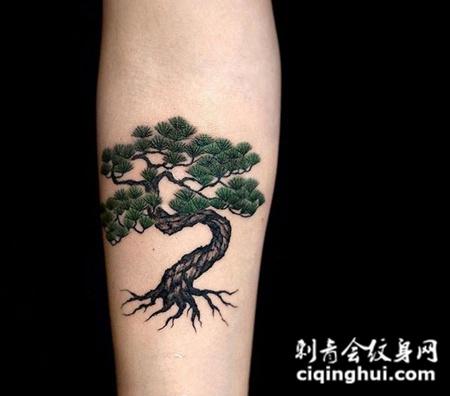 郁郁青葱,手臂松树彩绘纹身(图片编号:13030)_树图片