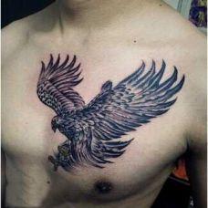 老鹰胸部纹身图片素材