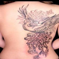 凤凰红色尾巴纹身图片素材