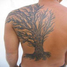 后背上的枯树纹身图案