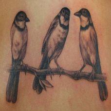 树枝上的小鸟纹身图案