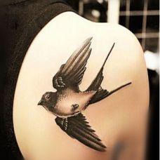 美女背部小鸟纹身图片