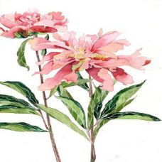经典花朵纹身手稿图案
