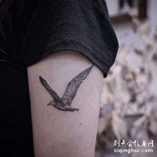 小清新大臂海鸥纹身图案