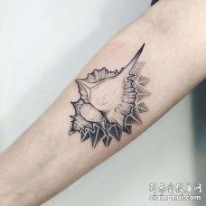 点线小臂海螺纹身图案