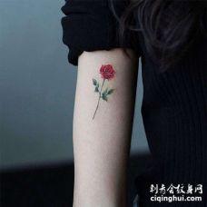 小清新大臂玫瑰纹身图案