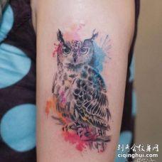 水彩大臂猫头鹰纹身图案