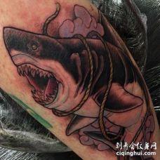 小腿外侧new school鲨鱼