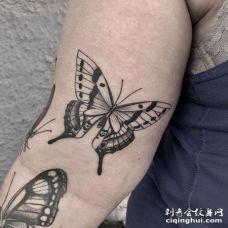 小臂内侧点刺蝴蝶