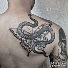 背部点刺蛇与蝴蝶