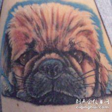 毛茸茸的小狗狗纹身图案