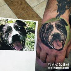 手背彩绘写实狗狗肖像纹身图案