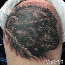 黑色的黑猩猩头部大臂纹身图案