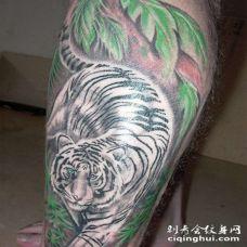 小腿美妙的丛林中的白虎纹身图案