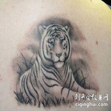 自然看起来非常逼真的白虎纹身图案