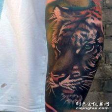 手臂美丽的彩色老虎头逼真纹身图案