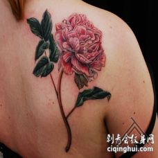 背部经典的彩绘绽放玫瑰花纹身图案