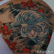 大臂亚洲风格的白虎纹身图案