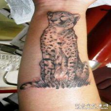 手臂猎豹坐在草地上彩绘纹身图案