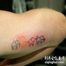 手臂彩色轮廓线条的象家庭纹身图案