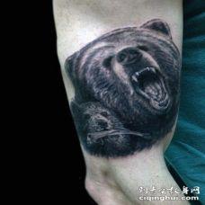 手臂野生的棕熊家庭写实纹身图案