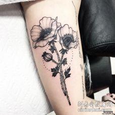 大臂小清新罂粟欧美点刺纹身图案