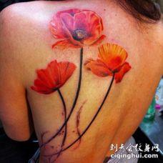 背部橙色的罂粟花写实纹身图案