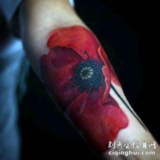 手臂3D逼真的自然彩色罂粟花纹身图案