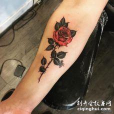 小臂欧美红玫瑰彩色纹身图案