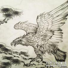 传统中式风格老鹰祥云纹身图案手稿