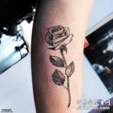 小臂黑色点刺玫瑰纹身图案