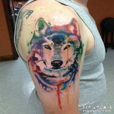 男子胳膊处纹了一只水彩色的可爱狼纹身