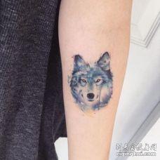 手臂内侧水彩狼头纹身图片