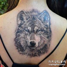 美女背部毛茸茸的大灰狼头纹身图案