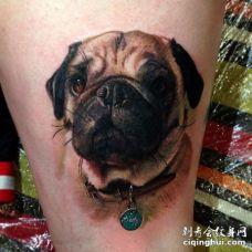 脖子上挂着项圈的逼真3D巴哥犬纹身图片