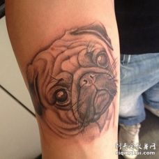 表情犹豫的3D巴哥犬手臂纹身图片