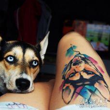 主人晒大腿3D哈士奇纹身与它紧贴着美女主人大腿凝视着的照片