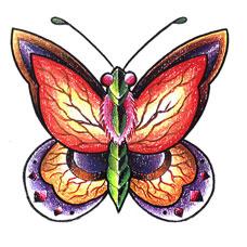 彩色蝴蝶纹身手稿