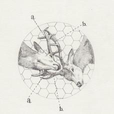 两只斗角的雄鹿纹身手稿