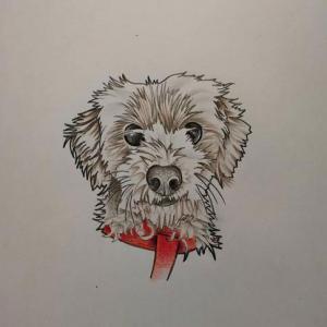 宠物狗纹身手稿图片