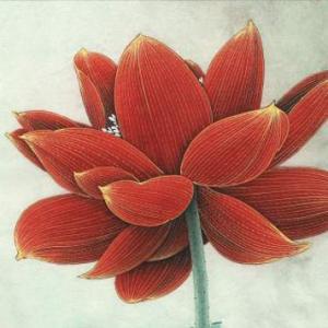 红莲花纹身手稿图片