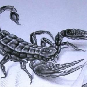 3d蝎子纹身手稿图片