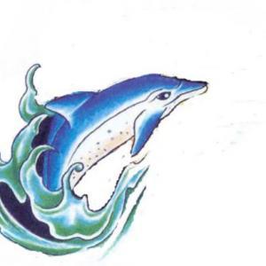 海豚纹身图案图片