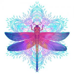 五彩蜻蜓纹身手稿图片