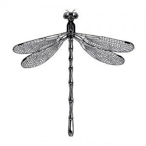 黑灰蜻蜓纹身手稿图片