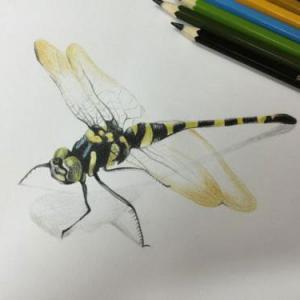 3d写实蜻蜓纹身手稿图片