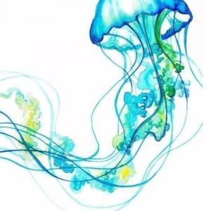 蓝色水母纹身手稿图片