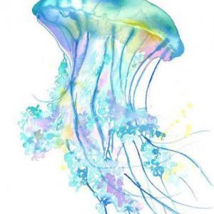 彩色唯美水母纹身手稿图片