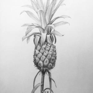 素描菠萝纹身手稿图片
