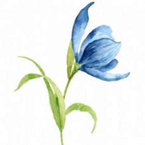 水彩蓝色郁金香纹身手稿图片